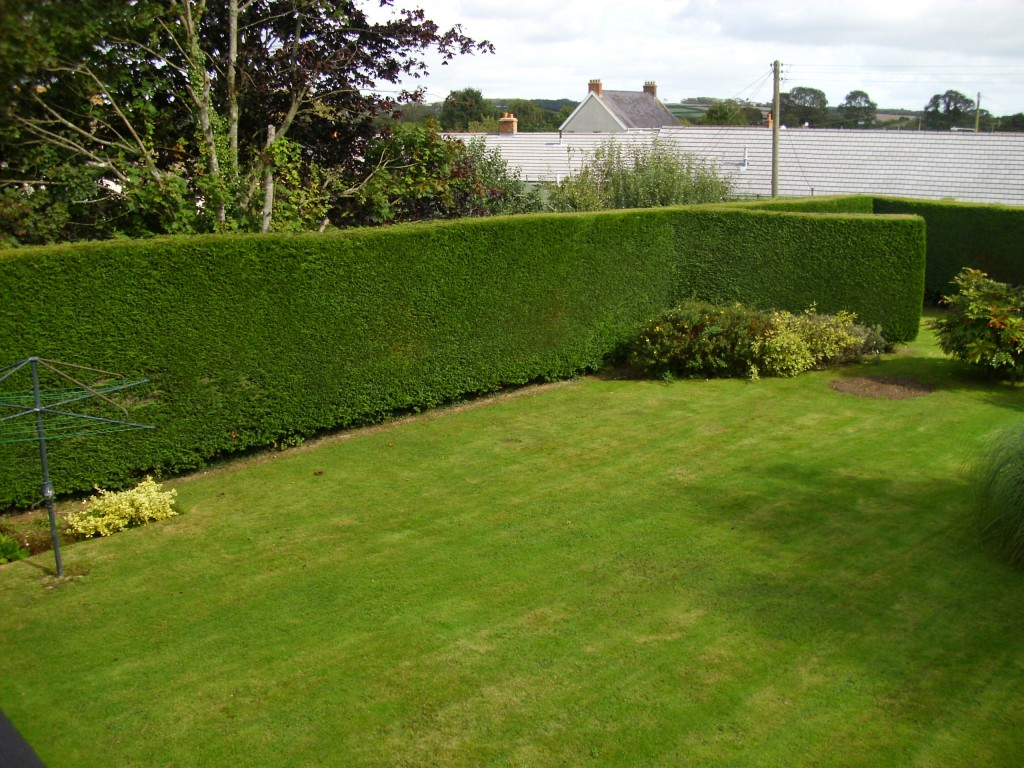 Treehedge-Hedges-backyard